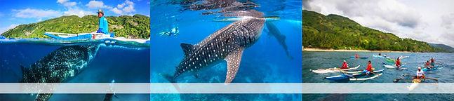 whale shark watching cebu