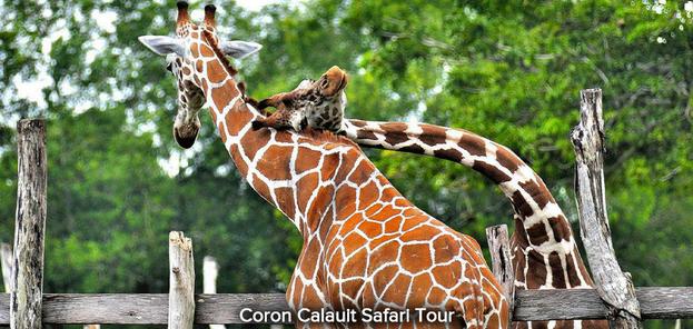Coron-Calauit-Safari-Tour-20.png