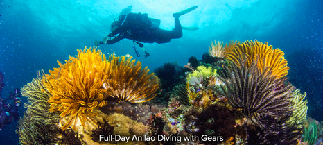 Full-Day-Anilao-Diving-with-Gears.png
