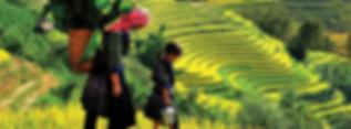 Banaue-header.png