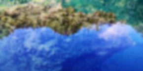 coron reef and wreck tour