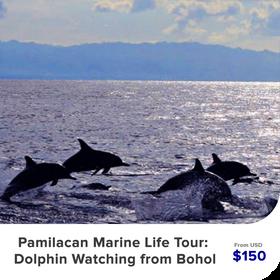 pamilacan-marine-life-tour.png