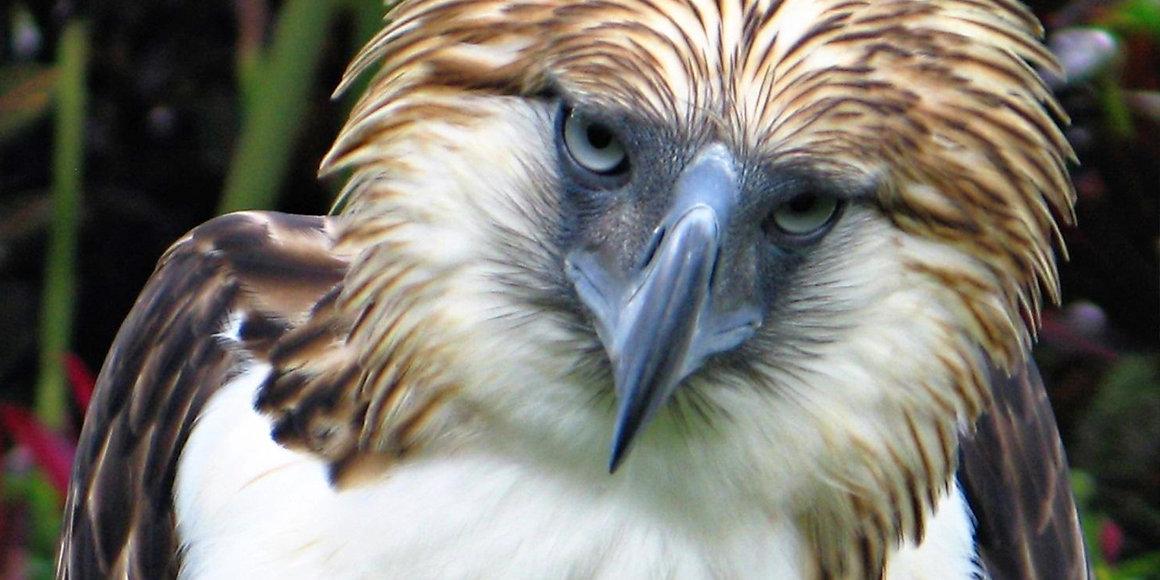 davao wildlife adventure