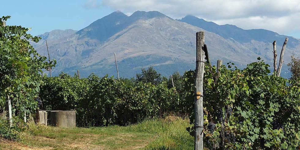 Tour delle vigne, visita in cantina e degustazione