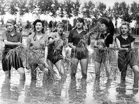 Mondine, il riso delle donne