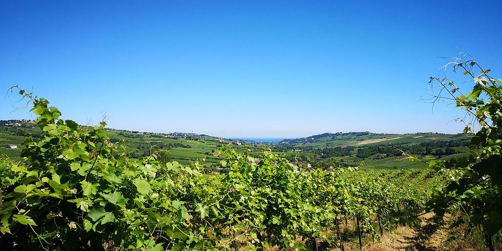 Picnic in vigna tra le dolci colline dell'Oltrepò