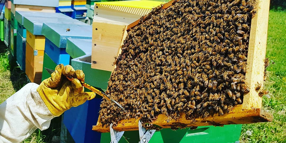 Come nasce il miele