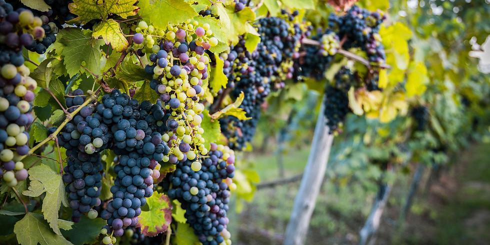 Profumo di vino a due passi dai laghi (16:00)