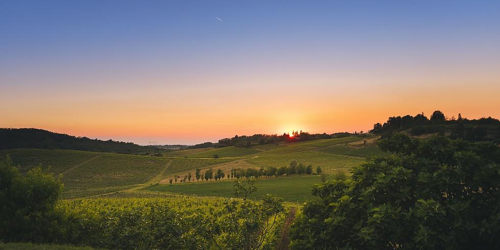 Passeggiata dei sapori tra Oltrepò e Monferrato