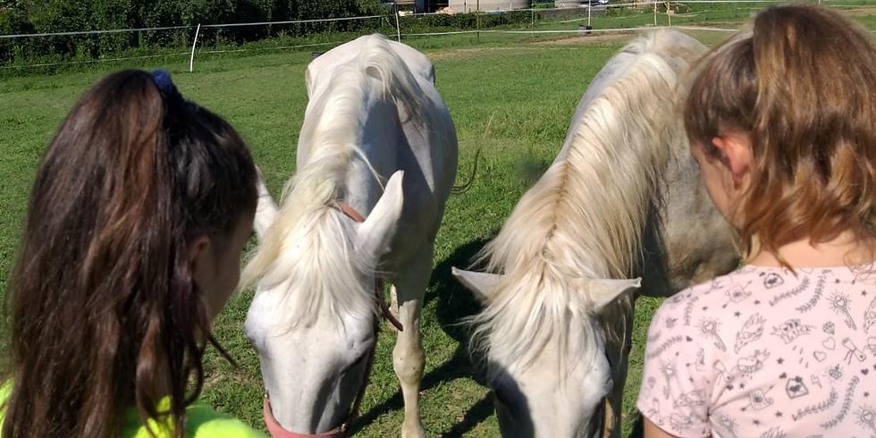 Magia del cavallo e delizie dell'orto