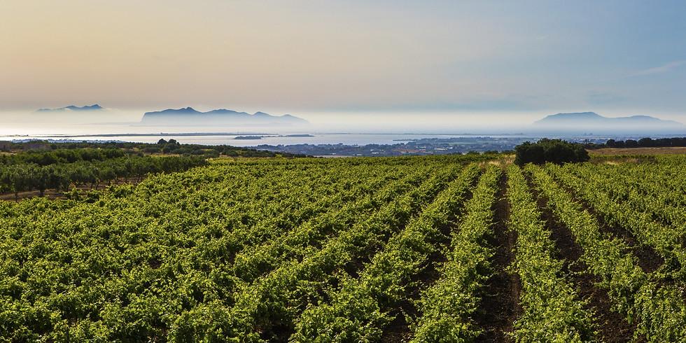 Picnic tra le vigne a due passi dal mare