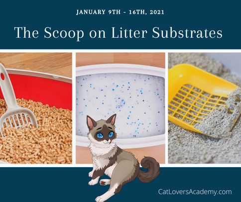 The Scoop on Litter Types.png
