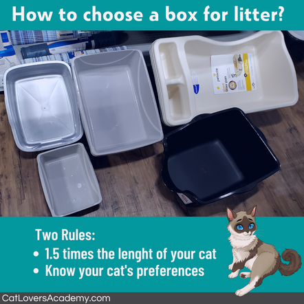 How to choose a box for litter_.png