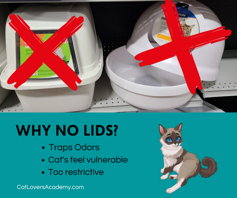 no lids (1).png