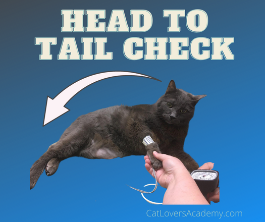 Head to Tail check weekly.png