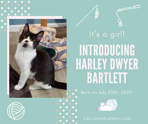 Introducing Harley Dwyer bartlett (2).pn