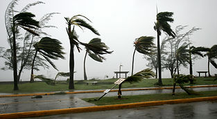 WIND PICTURE.jpg