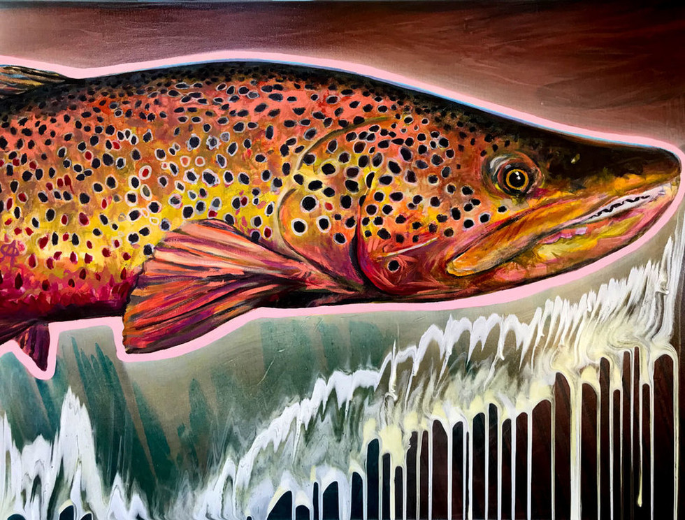 Copper Brown Trout, 2017