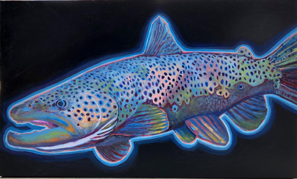 Blue Glow Brown Trout, 2019