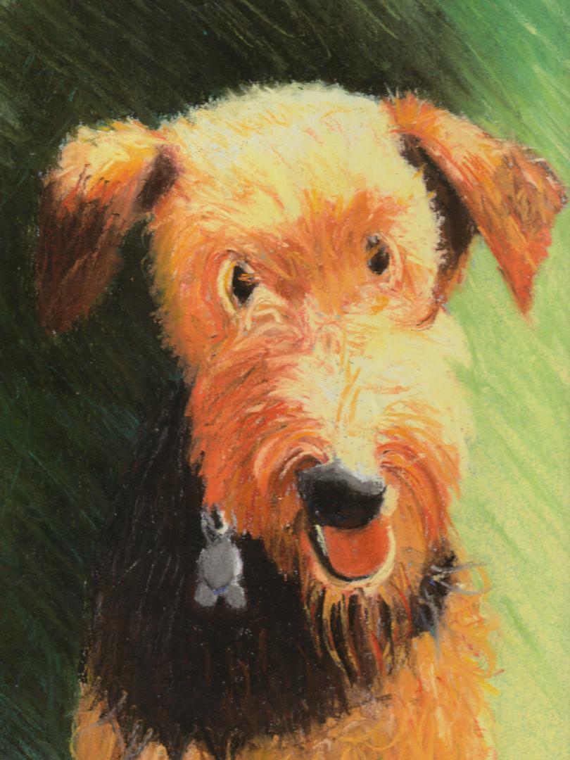 Windsor/Pet Portrait