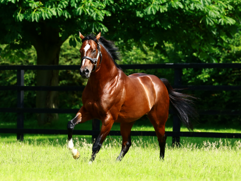 Toronado's yearlings have impressed the buyers and rewarded the breeders