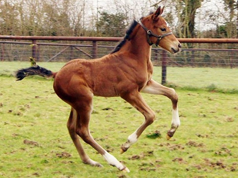 First foals for Toronado