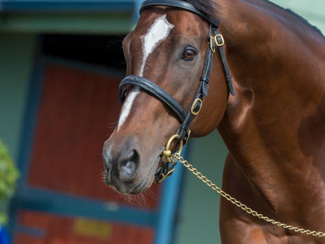 TORONADO FLIES IN AND FLIES INTO TOP CONTENTION