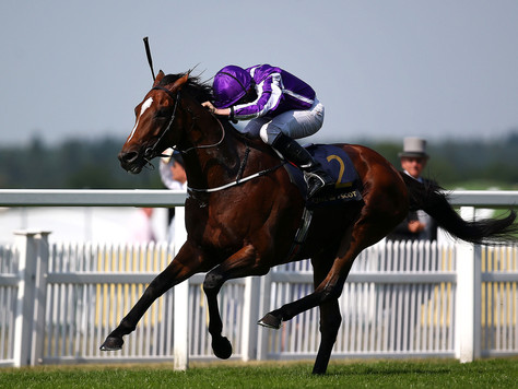 Victorian coup as globetrotter Highland Reel joins Swettenham's 2018 roster