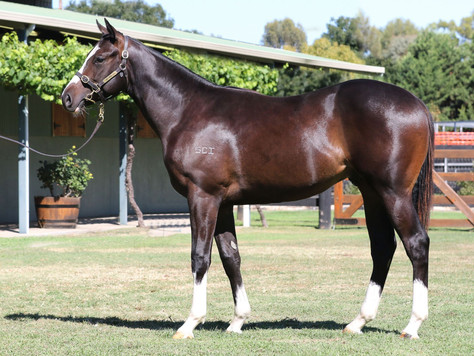 Toronado's True Serendipity impresses at the two-year-old trials