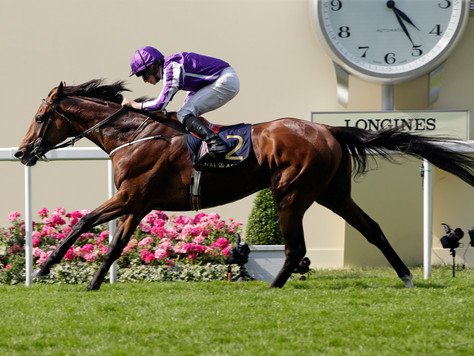 Global Star Highland Reel to stand at Swettenham Stud