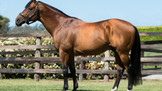 AKEED MOFEED TO STAND AT SWETTENHAM STUD