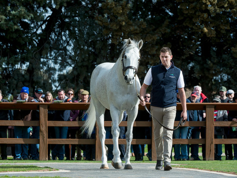 STAND AND DELIVER…. SWETTENHAM STUD ANNOUNCES 2020 FEES