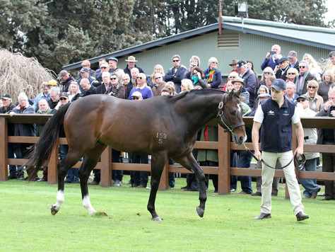 Magic Masters from Swettenham Stud