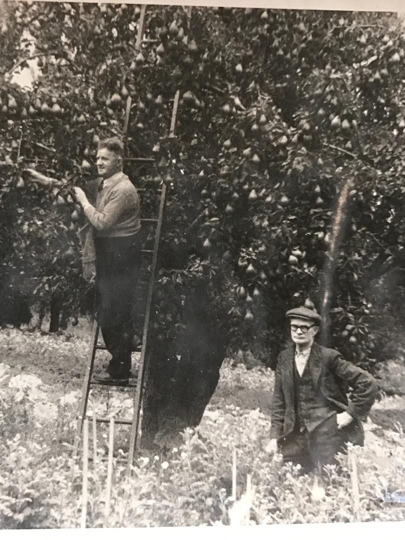 1950's - Jones the Gardeners