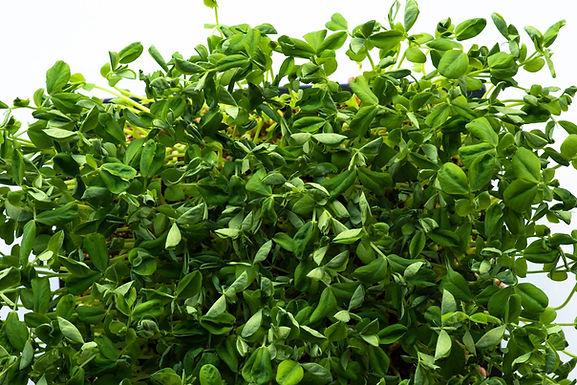 Pea, Non Tendril Salad