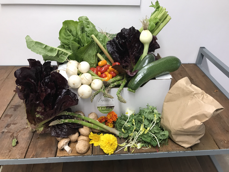 Our First Veg Box