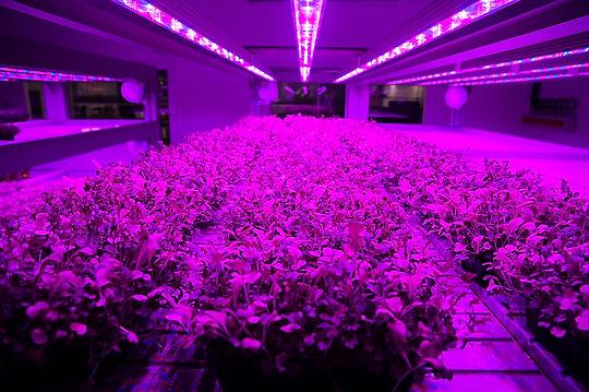Growing@field28 - 4 of 66.jpg