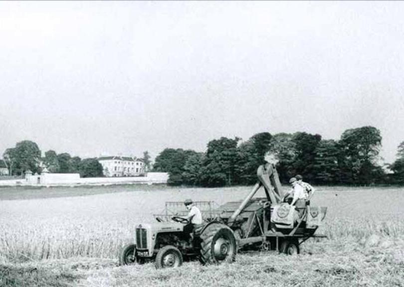 1950's - Dobbs the Farmers