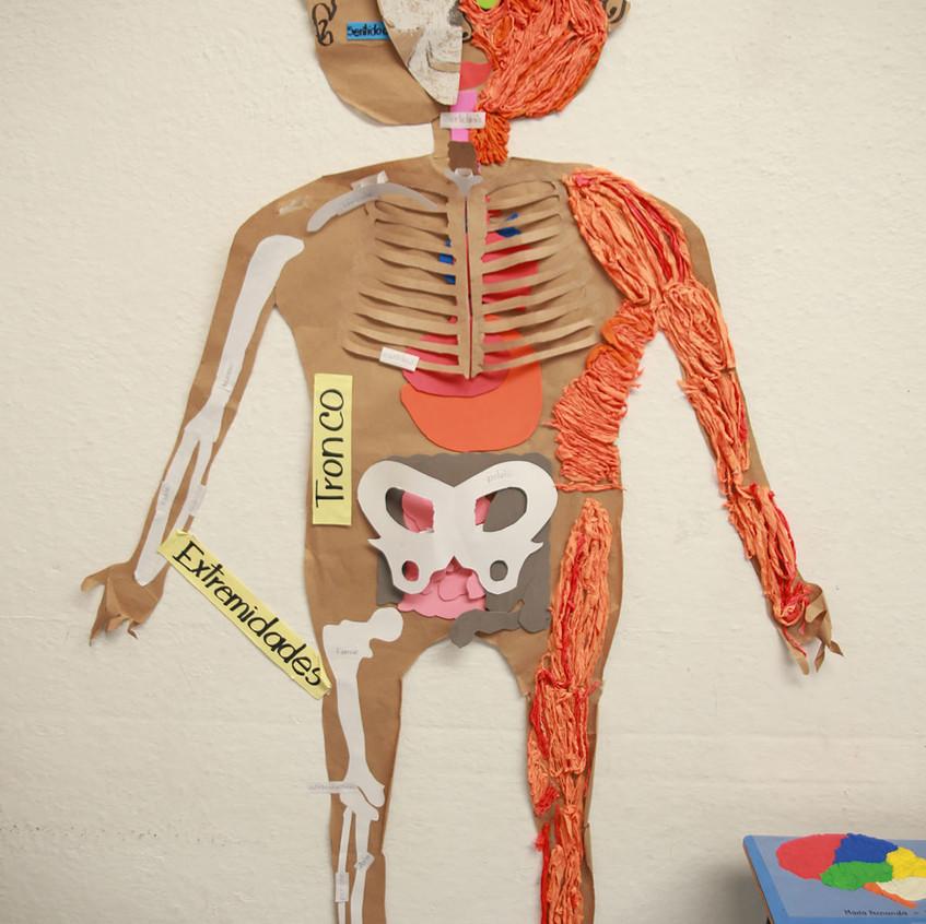 Cuerpo Humano (12) copy