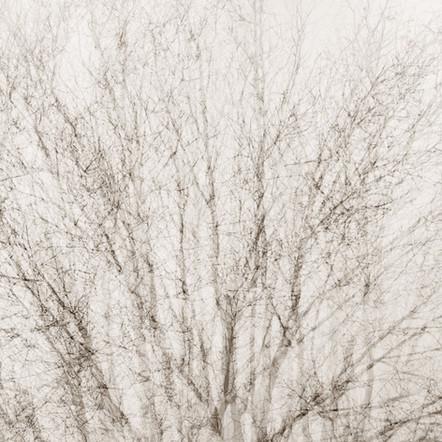 """Memoria #2"", 2011, by Ryan J. Bush"
