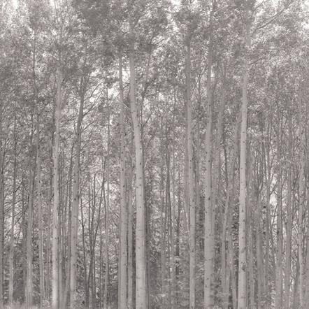 """Tree Portrait #5"", 2004, by Ryan J. Bush"
