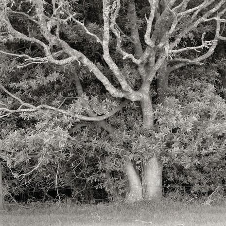 """Tree Portrait #3"", 2004, by Ryan J. Bush"