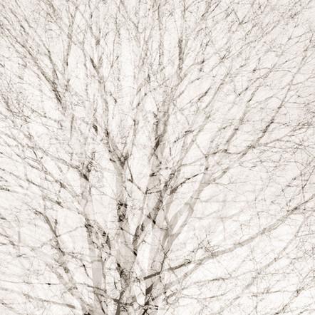 """Memoria #16"", 2011, by Ryan J. Bush"