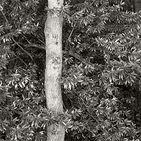 tree_portrait_3.jpg
