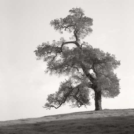 """Tree Portrait #1"", 2004, by Ryan J. Bush"