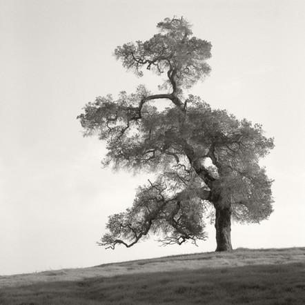 """Tree Portrait #1"", 2004, by Ryan J. Bush"