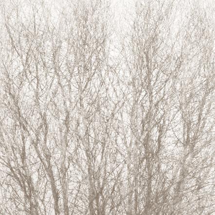 """Memoria #11"", 2011, by Ryan J. Bush"