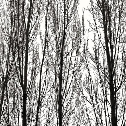 """Tree Canon"", 2004, by Ryan J. Bush"