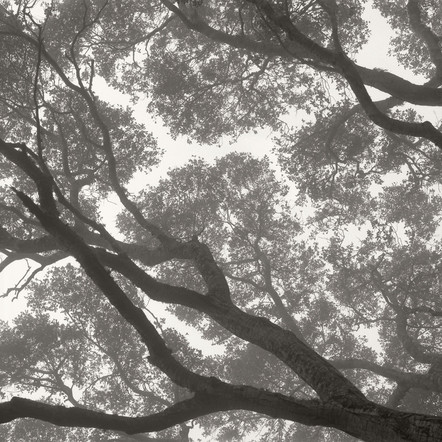 """Tree Portrait #10"", 2004, by Ryan J. Bush"