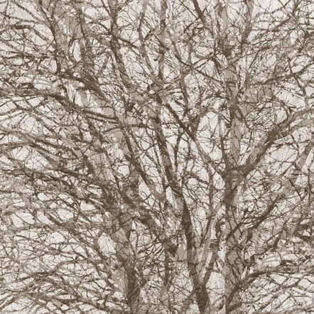 """Memoria #26"", 2013, by Ryan J. Bush"